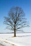 χειμώνας δέντρων Στοκ φωτογραφίες με δικαίωμα ελεύθερης χρήσης