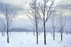 χειμώνας εδάφους Στοκ εικόνα με δικαίωμα ελεύθερης χρήσης