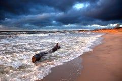 χειμώνας θάλασσας του s Στοκ Φωτογραφία