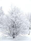 χειμώνας θάμνων Στοκ φωτογραφία με δικαίωμα ελεύθερης χρήσης