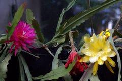 χειμώνας θερμοκηπίων λουλουδιών έκρηξης εμπρός Στοκ εικόνα με δικαίωμα ελεύθερης χρήσης