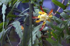 χειμώνας θερμοκηπίων λουλουδιών έκρηξης εμπρός Στοκ φωτογραφίες με δικαίωμα ελεύθερης χρήσης