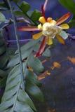 χειμώνας θερμοκηπίων λουλουδιών έκρηξης εμπρός Στοκ φωτογραφία με δικαίωμα ελεύθερης χρήσης