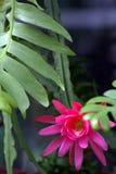 χειμώνας θερμοκηπίων λουλουδιών έκρηξης εμπρός Στοκ Εικόνες
