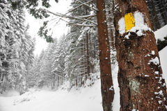 χειμώνας ιχνών πεζοπορίας Στοκ εικόνα με δικαίωμα ελεύθερης χρήσης