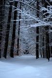 χειμώνας ιχνών Στοκ Εικόνα
