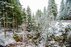 Χειμώνας και τοπίο χιονιού στο πιό βροχερό εθνικό πάρκο υποστηριγμάτων, παράδεισος στοκ φωτογραφίες