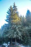 Χειμώνας και τοπίο χιονιού στοκ φωτογραφία με δικαίωμα ελεύθερης χρήσης