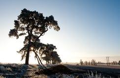 χειμώνας καλλιέργειας Στοκ Φωτογραφία