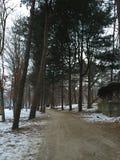 Χειμώνας κατά τη διάρκεια της ημέρας Στοκ φωτογραφία με δικαίωμα ελεύθερης χρήσης
