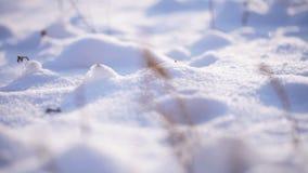 Χειμώνας καλάμων