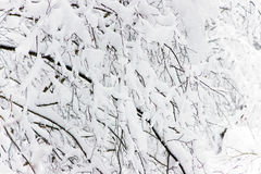χειμώνας κλάδων Στοκ φωτογραφίες με δικαίωμα ελεύθερης χρήσης