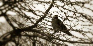 χειμώνας κοράκων στοκ φωτογραφίες