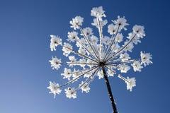 χειμώνας λουλουδιών Στοκ φωτογραφία με δικαίωμα ελεύθερης χρήσης