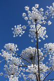 χειμώνας λουλουδιών Στοκ φωτογραφίες με δικαίωμα ελεύθερης χρήσης