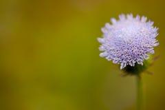 χειμώνας λουλουδιών Στοκ εικόνα με δικαίωμα ελεύθερης χρήσης