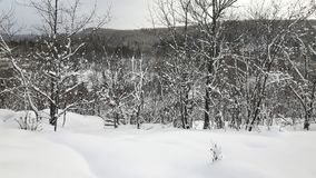 Χειμώνας μεταξύ των δέντρων Στοκ φωτογραφία με δικαίωμα ελεύθερης χρήσης