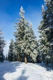 Χειμώνας με το χιόνι στα γιγαντιαία βουνά, Δημοκρατία της Τσεχίας Στοκ εικόνα με δικαίωμα ελεύθερης χρήσης