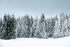 Χειμώνας με το χιόνι στα γιγαντιαία βουνά, Δημοκρατία της Τσεχίας Στοκ φωτογραφίες με δικαίωμα ελεύθερης χρήσης