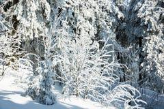 Χειμώνας με το χιόνι στα γιγαντιαία βουνά, Δημοκρατία της Τσεχίας Στοκ φωτογραφία με δικαίωμα ελεύθερης χρήσης