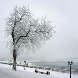 Χειμώνας, μόνο δέντρο στην ακτή του ποταμού στοκ εικόνα