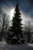χειμώνας νύχτας Στοκ Εικόνες