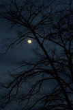 χειμώνας νύχτας Στοκ φωτογραφίες με δικαίωμα ελεύθερης χρήσης