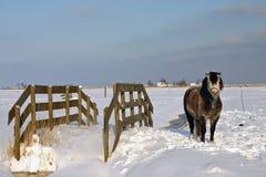 χειμώνας ολλανδικής σκη Στοκ Εικόνα