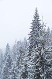 Χειμώνας ουκρανικά Carpathians Στοκ Φωτογραφία