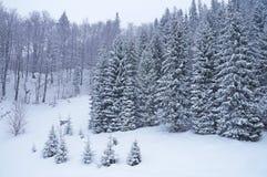 Χειμώνας ουκρανικά Carpathians Στοκ Εικόνες