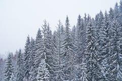 Χειμώνας ουκρανικά Carpathians Στοκ εικόνες με δικαίωμα ελεύθερης χρήσης