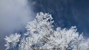 χειμώνας ουρανού ανασκόπ&et Στοκ Φωτογραφίες
