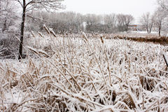 χειμώνας ουρών γατών Στοκ φωτογραφία με δικαίωμα ελεύθερης χρήσης