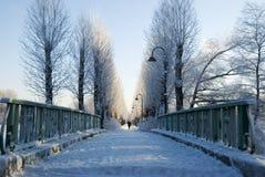 χειμώνας οδικών χιονώδης δέντρων καμπυλών λεωφόρων Στοκ εικόνες με δικαίωμα ελεύθερης χρήσης