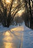 χειμώνας πάρκων βραδιού στοκ εικόνες