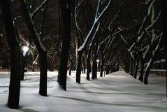 χειμώνας πάρκων νύχτας πόλε&om Στοκ φωτογραφία με δικαίωμα ελεύθερης χρήσης