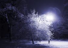 χειμώνας πάρκων νύχτας Στοκ Εικόνα