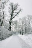 χειμώνας πάρκων παρόδων Στοκ Φωτογραφία