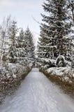 χειμώνας πάρκων Στοκ Εικόνα