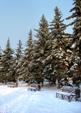 χειμώνας πάρκων στοκ φωτογραφία