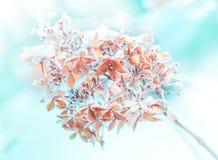 Χειμώνας - παγωμένη μακροεντολή κλάδων λουλουδιών κοντά επάνω Στοκ Εικόνες