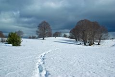 χειμώνας πανοράματος της &B Στοκ φωτογραφίες με δικαίωμα ελεύθερης χρήσης