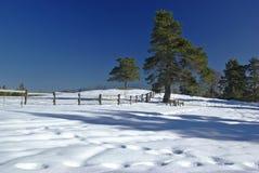 χειμώνας πανοράματος Στοκ Φωτογραφία