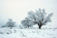χειμώνας πεδίων Στοκ εικόνα με δικαίωμα ελεύθερης χρήσης
