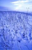 χειμώνας πεδίων Στοκ εικόνες με δικαίωμα ελεύθερης χρήσης