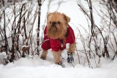 χειμώνας περιπάτων σκυλιών στοκ φωτογραφία