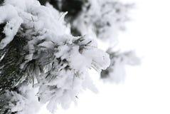 χειμώνας πεύκων Στοκ φωτογραφίες με δικαίωμα ελεύθερης χρήσης