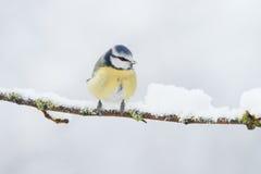 χειμώνας πουλιών Στοκ εικόνα με δικαίωμα ελεύθερης χρήσης