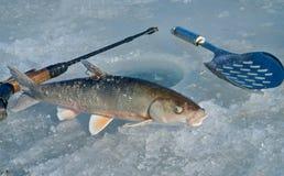 Χειμώνας που αλιεύει 12 στοκ εικόνα