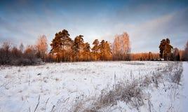 χειμώνας πρωινού τοπίων Στοκ φωτογραφία με δικαίωμα ελεύθερης χρήσης